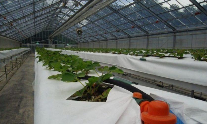 画像: 施設園芸環境制御1